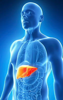 Hepatitis-The Silent Killer